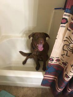 Whenever he hears you open the bathroom door he loves jumping in the shower http://ift.tt/2wIwwg1