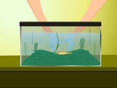 How to Take Care of Goldfish -- via wikiHow.com