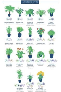 NASA compiled a list of the best air-cleaning plants for your home. - Album on Imgur