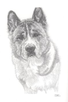 AKITA dog Limited Edition art drawing print by ArcadiaPortraits
