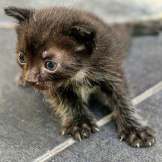 Dünyaya gözlerini yeni açmış bir kedi..