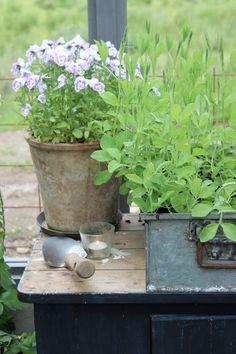 Ja , jag drömmer ju fortfarande om ett eget växthus och samlar på mig massor av inspiration kring detta.De här bilderna jag visar i...