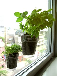 Window Gardening - transparent herb planters attachable to any window via suction cups with in-built drip trays