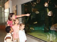 Check out family-friendly activities in Gulf Shores, Alabama.