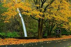 Image result for horsetail falls oregon. Columbia River Gorge. Horsetail Falls is one of of three waterfalls and a couple of views of Oneonta Gorge. http://www.oregonhikers.org/field_guide/Horsetail_Falls_Loop_Hike