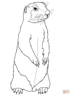 prairie dog coloring page supercoloringcom - Armadillo Coloring Pages Print