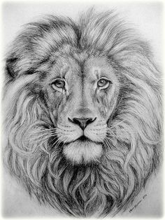 Lion's Head by ParadizeLily on DeviantArt <br> Tribal Lion Tattoo, Lion Head Tattoos, Lion Tattoo Design, Animal Sketches, Animal Drawings, Pencil Drawings, Drawing Sketches, Drawing Ideas, Lion Head Drawing