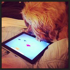 Playing on the iPad