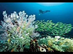 One of the best diving destinations in the world. Raja Ampat, Indonesia.