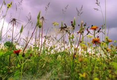 Meadow flowers and grasses by Karen Buttery on 500px