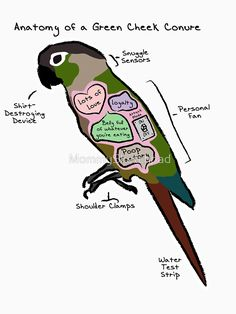 Anatomy of a Green Cheek Conure by MommySketchpad Parrot Pet, Parrot Bird, Parrot Toys, Budgie Toys, Funny Birds, Cute Birds, Animals And Pets, Funny Animals, Cute Animals