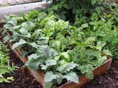 Mange gode grønsaker i en pallekarm