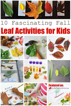 10 FASCINATING FALL LEAF ACTIVITIES FOR KIDS: The list includes ways to explore color, science activities, math and more!