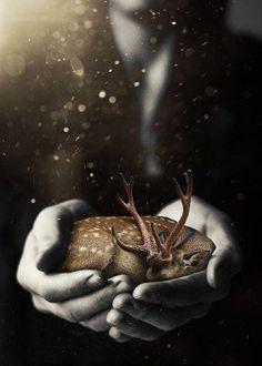 photo deer surrealism