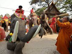 National Thai Elephant Day is a special day for Thais