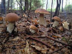 Mushroom Art, Zentangle, Stuffed Mushrooms, Food And Drink, Vegetables, Drinks, Fungi, Mushrooms, Recipes