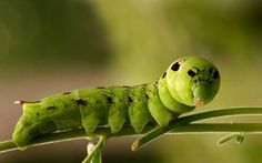 The Caterpillar and is strenuous fight to become a butterfly.