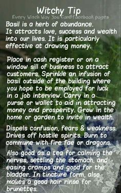 Witchy Tips - Basil - Pinned by The Mystic's Emporium on Etsy Magic Herbs, Herbal Magic, Youtube Tips, Every Witch Way, Eclectic Witch, Kitchen Witchery, Wiccan Spells, Healing Spells, Wiccan Beliefs