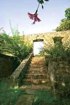 Overgrown ruins in St. Croix #USVI #Caribbean
