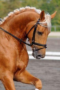 "horse says ""help me please"""