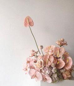 anthurium.火鶴花(學名:Anthurium andraeanum),又名紅掌、花燭、安祖花。屬天南星科花燭屬。