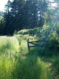 """Sunlit meadow--""""The world calls them its singers and poets and artists and storytellers; but they are just people who have never forgotten the way to fairyland."""" ― L.M. Montgomery"""