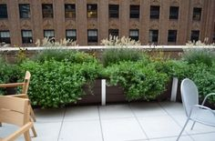 large garden planters on roof deck