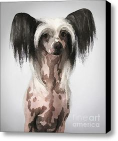 Chinese Crested Hairless Puppy Painting Stretched Canvas Print / Canvas Art By Marvin Blaine