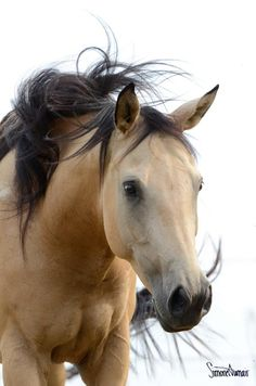 The Gifts Of Life - this horse reminds me of one of my Horses - Beatle - she was a Palamino Buckskin !!!