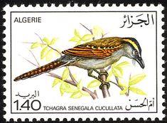 http://www.birdtheme.org/country/algeria.html