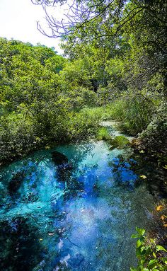 The blue spring of Rio Sucuri, Mato Grosso do Sul, Brazil