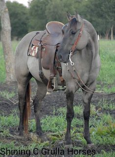 My dream horse //oml that colour 😍 Horses And Dogs, Cute Horses, Horse Love, Animals And Pets, Cute Animals, Most Beautiful Horses, All The Pretty Horses, Animals Beautiful, Horse Photos
