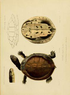 ptie7 t2..ptie.2 - Expédition dans les parties centrales de l'Amérique du Sud : - Biodiversity Heritage Library