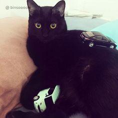달리, 차 뽑았다~ 집사 데리러 가!  #캣우먼 #검은_고양이 #달리 #귀가_쫑긋 #현대자동차 #그랜저 #다이캐스트 #장난감 #일상 #소소잼 #Hyundai #motor #Grandeur #Azera #diecast #cat #daily