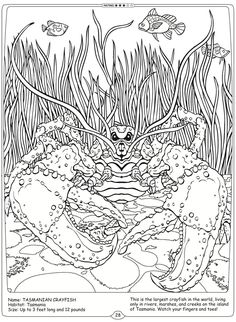 Welcome to Dover Publications River Monsters of the World  Tasmanian Crayfish