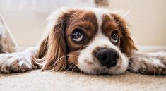 You wish you could take your dog with you everywhere, but occasionally, you need a dog boarding facility (kennel) to be their home away from home. Stop Puppy From Biting, Puppy Biting, Puppy Dog Eyes, Dog Cat, Puppy Love Quotes, Dog Quotes, Dog Has Diarrhea, Dogs And Puppies, Cute Puppies