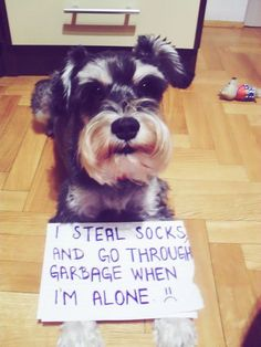 Dogshaming, a Tumblr. Most of these hilarious pictures involve poo of some kind, but we're talking about dogs here. What do you expect?
