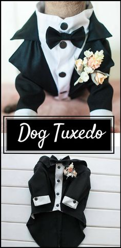 This Wedding Tuxedo for dogs is such a cute way to include your furry friend in your wedding or other special occasion. #ad #weddingideas