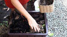 Como cultivar uma horta caseira