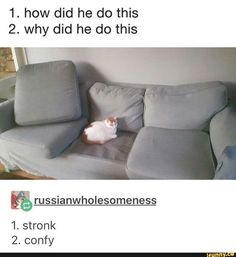 """Fifteen Feline Memes For Your Caturday Enjoyment - Funny memes that """"GET IT"""" and want you to too. Get the latest funniest memes and keep up what is going on in the meme-o-sphere. Funny Animal Memes, Stupid Funny Memes, Cute Funny Animals, Cat Memes, Funny Cute, Cute Cats, Funny Stuff, Funniest Memes, Funny Humor"""