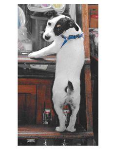 finn - he looks like he is getting into mischief!