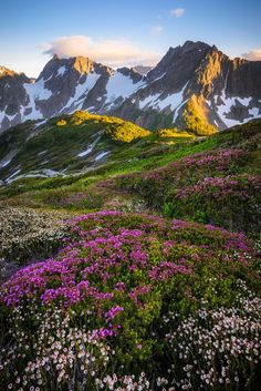 Blossoming beds of heather on Sahale Arm, overlooking the peaks above Cascade Pass (North Cascade National Park, Washington) by Bryan Swan / (Cool Pictures Of Flowers) Beautiful World, Beautiful Places, Beautiful Pictures, All Nature, Amazing Nature, Nature Water, North Cascades National Park, Beautiful Landscapes, The Great Outdoors