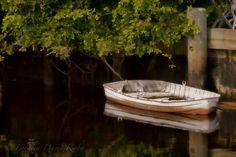 Little Boat..., via Flickr.