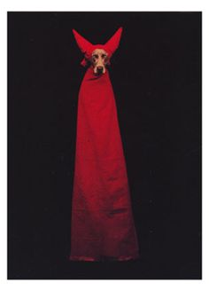 William Wegman - Devil Dog