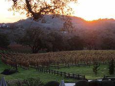 The sun sets over our Alexander Valley tasting room. Thus ends a fun day of meeting, eating and tasting with our HANNA wine club members. We offered perfect parings of HANNA wines and Cousteaux French Bakery's pastries. Everyone left full and happy.
