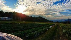田舎の1日の終わり #日の入り前#太陽#畑#畑のある暮らし#空#空が好きな人と繋がりたい#空色#雲#青空#山#スマホ写真#スマホ撮影#風景写真#風景写真家#XperiaXZPremium#follow#smartphone_photos#landscaper#landscapephoto#landscapephotography#nature#naturephotography#field#crops#mountains#sun#loves_skyandsunset#sunset#countrysidelife#instaskylovers