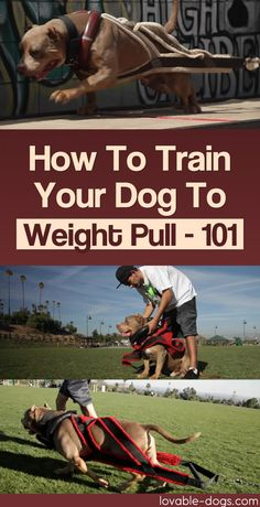 How To Train Your Dog To Weight Pull – 101	►►	http://lovable-dogs.com/how-to-train-your-dog-to-weight-pull-101/?i=p