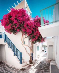 The charming streets of Paroikia  tag your traveling partner   Cyclades Greece  @adrianbaias  #travel #blogger #beautifuldestinations #vacation #inspiration #traveltheworld #tourist #ideas #travelideas #bestplace #bestview  #wonderful_places  #worldwonder #europe #greece #visitgreece #travelgreece #traveling #cyclades #paroikia #greecephotos #photooftheday #onvacation Paros, Greece Travel, Greek Islands, Wonderful Places, Vacation, Instagram, Street, World, Beautiful