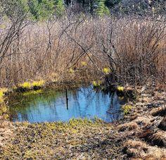 Spring Pool. Quabbin Reservoir. Ware, Massachusetts. Paul Chandler March 2018.