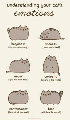 Understanding your cat's emotions...A kitty's main concern is his food :)
